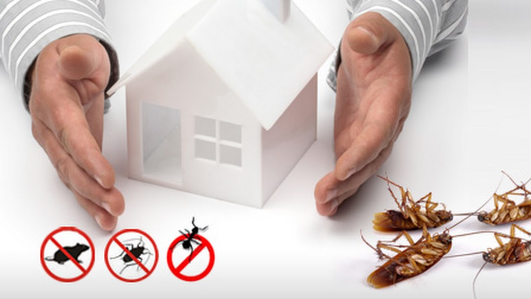 Why Pest control ? Who does it and How to Find a Good Pest Control Service  Provider? - RPA Pest Control 8318145337